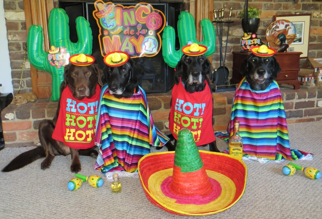 It's time for a FIESTA! Come to BANDIDOS' and party like BIG DOGS!